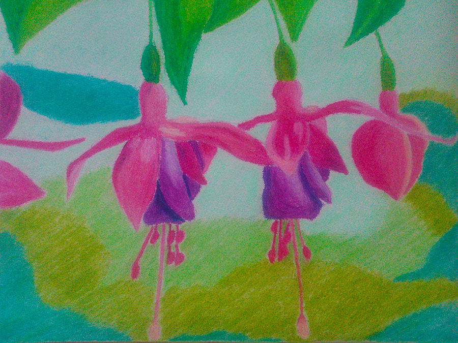 Fuchsia Oil Pastel Drawing