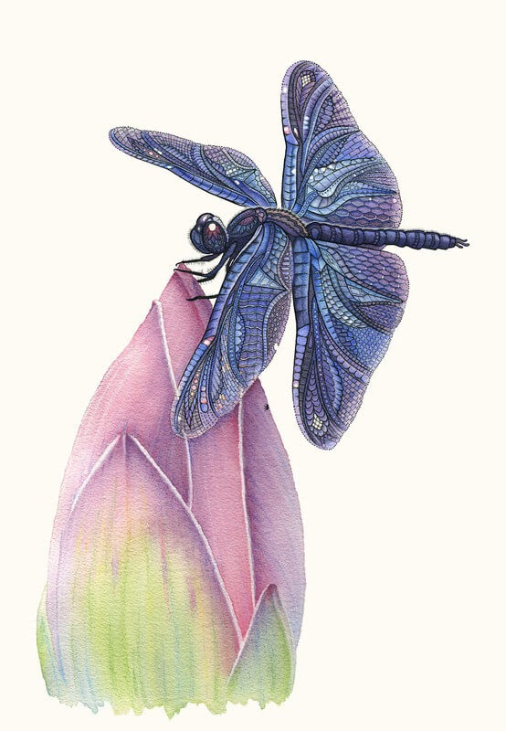 11-Dragonfly-and-Lotus-Z-H-Field-Distinctive-Animal-Drawings-and-Paintings-www-designstack-co