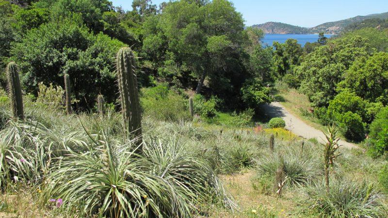 Jardin plantas clima mediterráneo (Domaine du Rayol) diseño: Gilles Clement