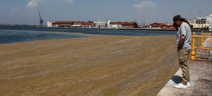 Θερμαϊκός Κόλπος, μια νεκρή θάλασσα! Εικόνες-Σοκ με τα νερά να έχουν γίνει καφέ από τη ρύπανση!!!