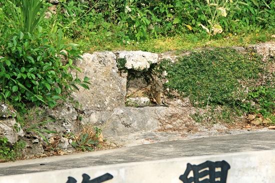 復興乃泉の写真