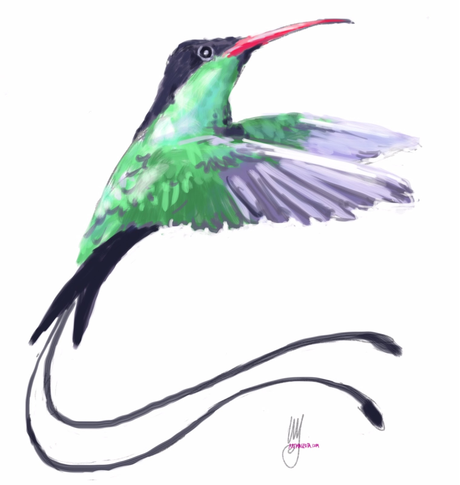 Red-billed streamertail sketch painting. Bird art drawing by illustrator Artmagenta