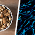 Uma dieta rica em nozes, amêndoas e avelãs parece melhorar a contagem e motilidade dos espermatozoides
