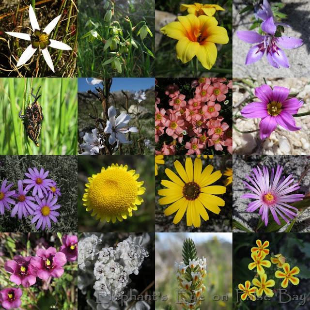 Blackhill September flowers
