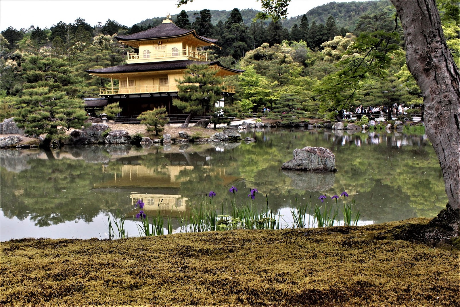 randomthoughts: Our trip to Japan