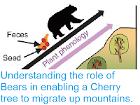 https://sciencythoughts.blogspot.com/2016/04/understanding-role-of-bears-in-enabling.html