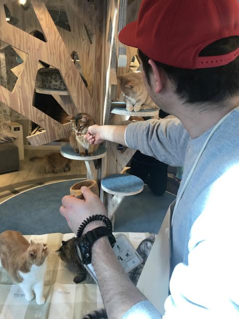 Cat cafe MOCHA Harajyuku Store