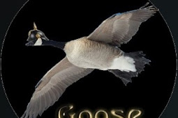 Goose Addon - How To Install Goose Kodi Addon Repo