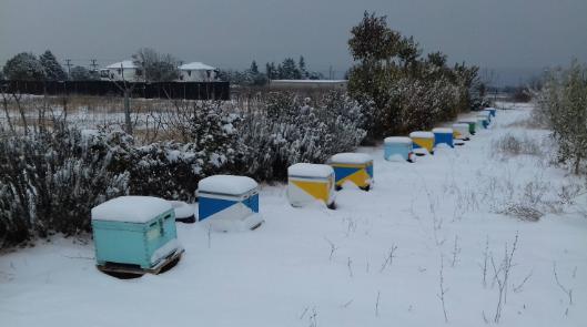 Τα μελισσάκια του Γιώργου από το Λιτόχωρο Πιερίας