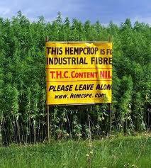 http://3.bp.blogspot.com/-h8gfyIbtXGM/UAx1yxp4kjI/AAAAAAAAAoU/bG5ez3J9ZJE/s1600/Hemp+-+Kentucky+Hemp+Coalition.jpg