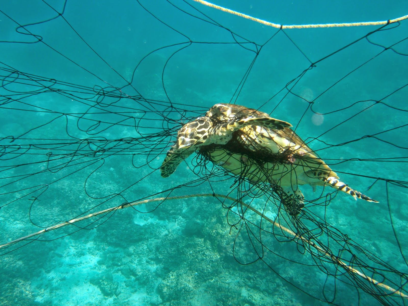 Sea Turtle Species List