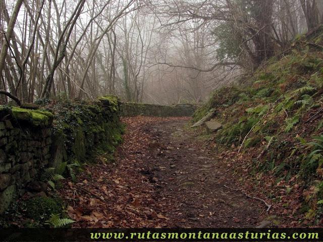 Camino entre muro de piedra y bosque
