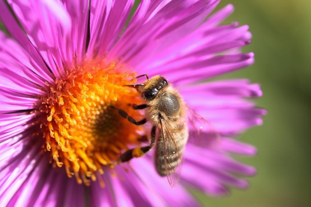 freies europa free europe einheimische fauna und flora hilflos gegen eingeschleppte viren aus. Black Bedroom Furniture Sets. Home Design Ideas