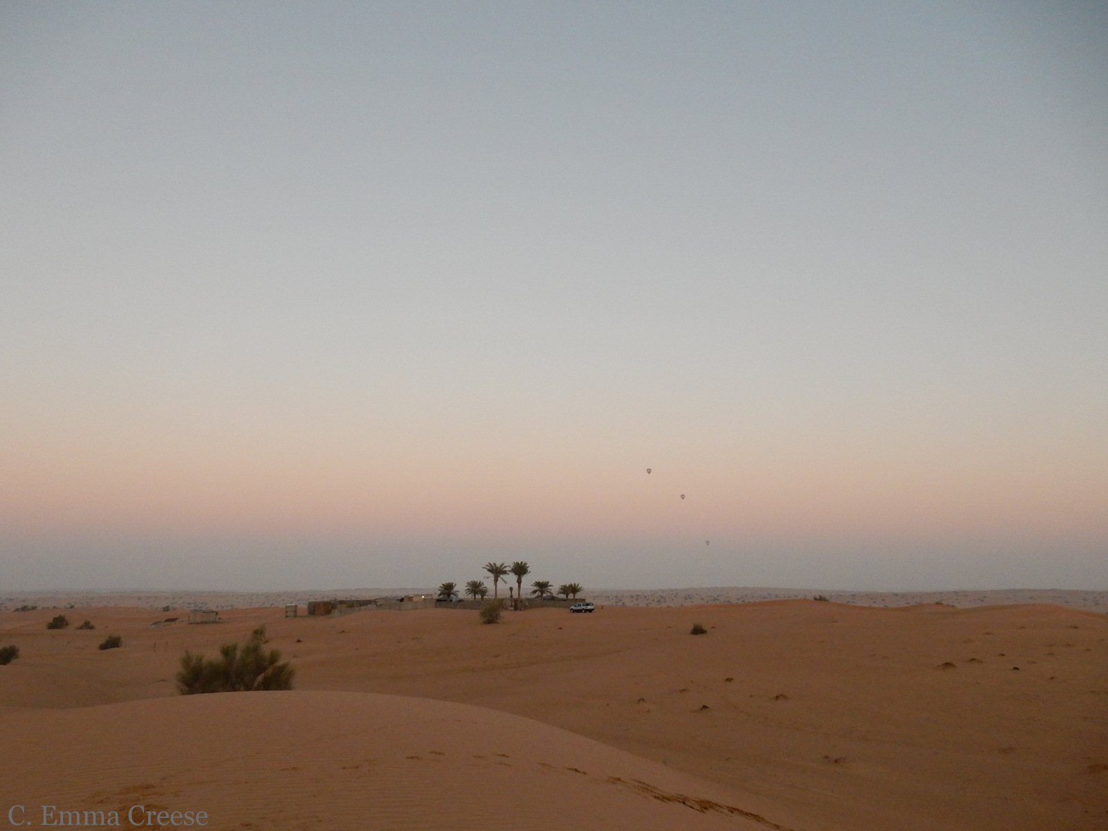 Desert Horizon Park Dog