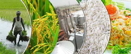One of the emerging industry among Top rice mill machine suppliers – Bansals Group