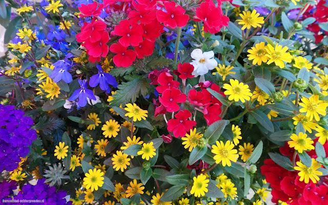 Foto gekleurde bloemen