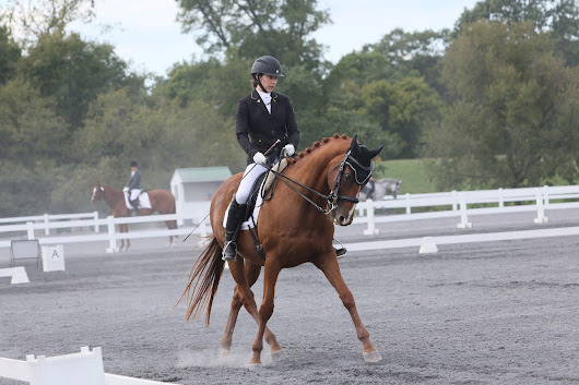 Understanding and Adjusting the Dressage Frame