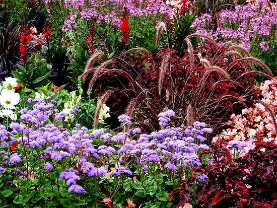 Phlox and ornamental grass