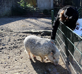 Schweineliebe-Wildgehege-Moritzburg