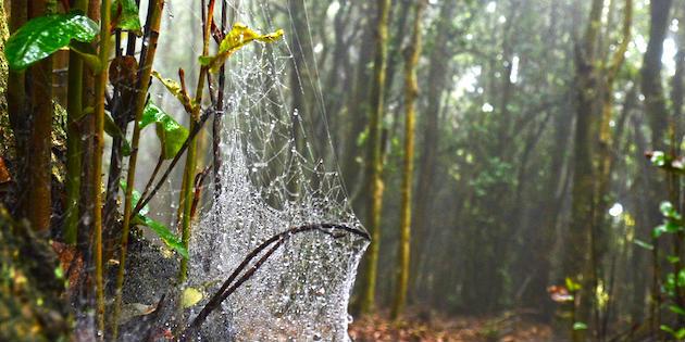Detalle árbol con tela de araña