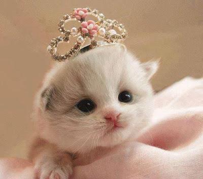 gata princesinha