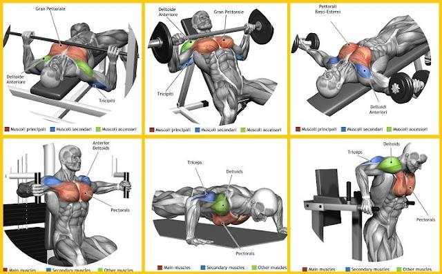 Latissimus Dorsi Exercises Dumbbells