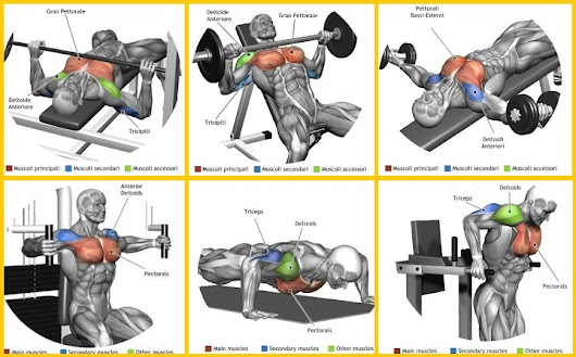 What Are the 6 Best Exercises For Quickly Building Your Chest Muscles? Add Inches in Minutes!