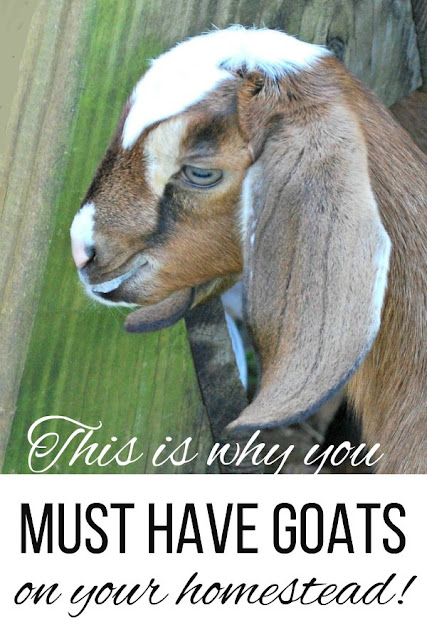 Here's why you absolutely need goats on your homestead.