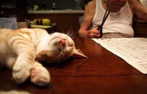 Bikin Haru, Kakek Pemarah ini berubah Drastis Karena Kucing Lucu Ini