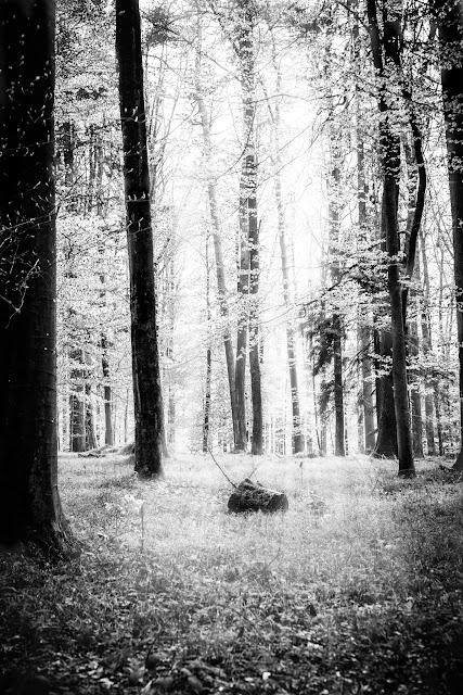 Black and White, Photograhy, Schwarz Weiß Fotografie, Pomponetti