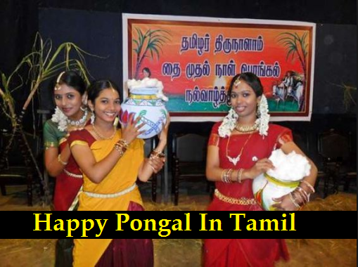 Happy Pongal Wishes, Greetings, Quotes, Images, Messages, SMS, Sayings In Tmail Language