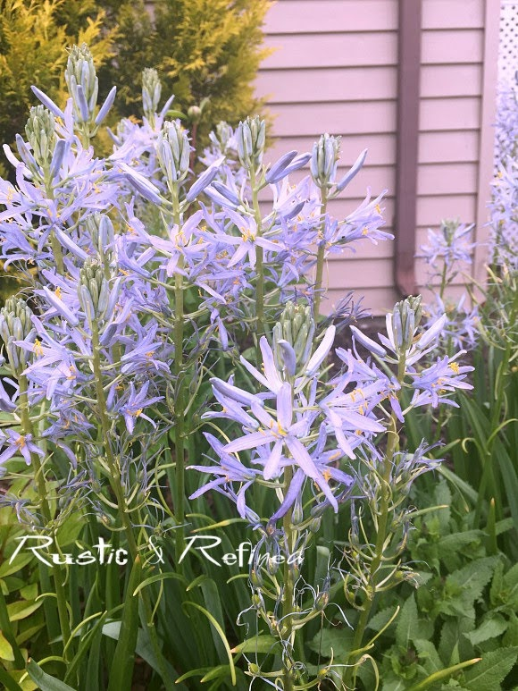 perennial plants that are big performers in the garden