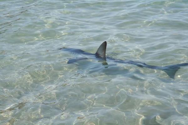 Κρήτη: Κολυμπούσαν και είδαν δίπλα τους έναν καρχαρία (pics)