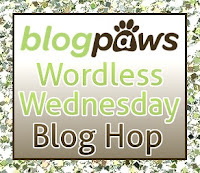 WW Blog Paws
