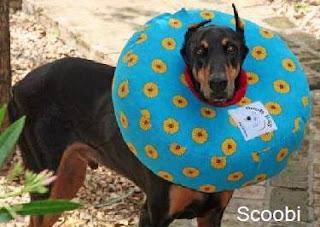 colares para cães