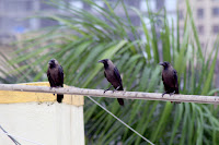 Meeting, Images, Love, Life, Monsoon, Photography - Anil Choudhary
