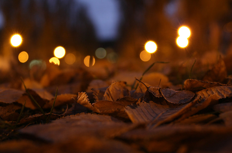 Fall Evening Wallpapers Autumn Vanilla Picture Autumn Trees At Dusk