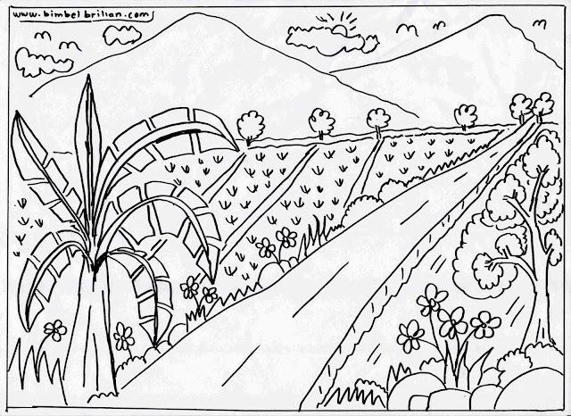13. Gambar Sawah-Sawah Ada Pohon Pisang Dan Pegunungan