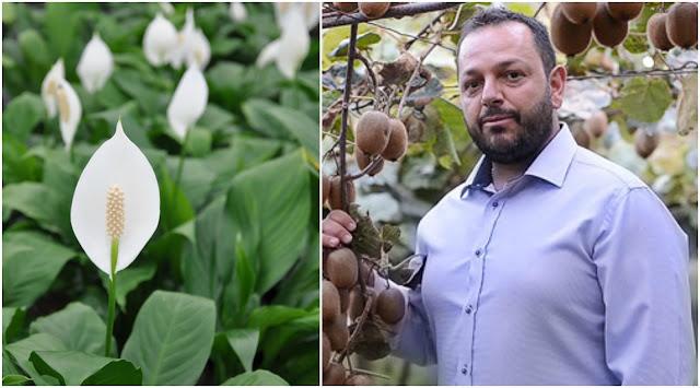 Φυτά για το σπίτι και το γραφείο, μια επιτακτική ανάγκη - Του Άγγελου Ντόρκου