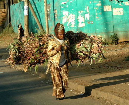 Firewood Ethiopian capital of Addis Ababa bundles of eucalyptus branches used as firewood