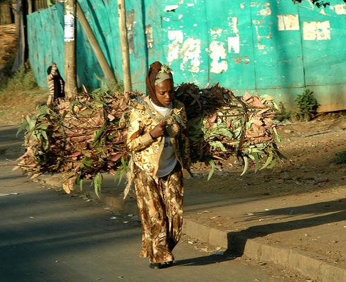 Firewood Ethiopian capital of Addis Ababa bundles of eucalyptus branches used as firewood