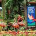 Kinh nghiệm khám pha vườn chim Jurong tại Singapore