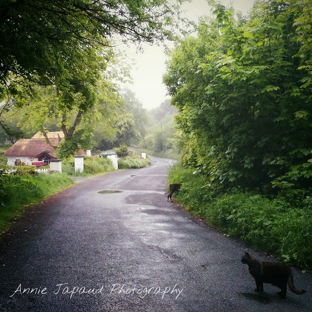 Fairybridge cottage © Annie Japaud Photography