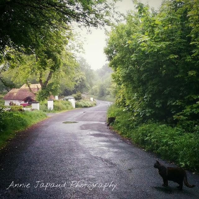 Fairybridge cottage © Annie Japaud Photography