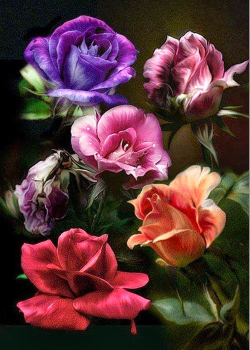 roseesss.jpg