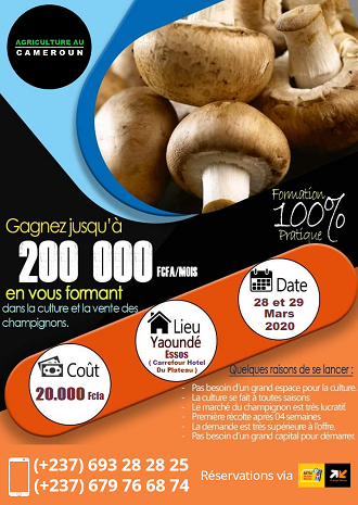 Formation en production  des champignons comestibles