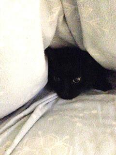 Chucky, in hiding