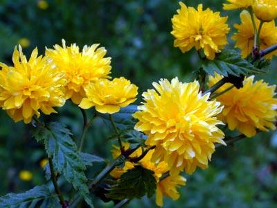 Arbustos para macetas for Tinajas de barro para jardin