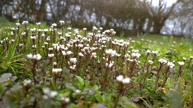 erste Blüten in der Blumenwiese (c) by Joachim Wenk