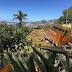 Jardim Botânico da Madeira - Eng.º Rui Vieira